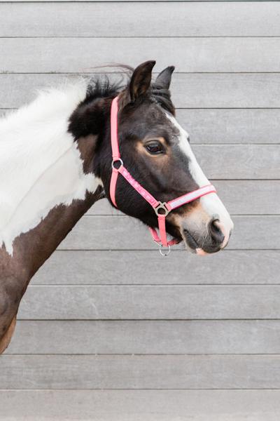 Pony foto